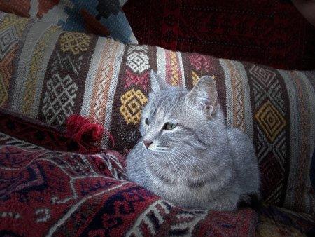Cappadocia Cat